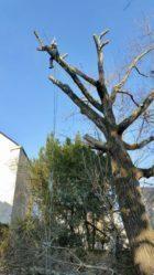 abattage arbre avec papyrus paysage